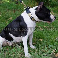 Dog Collar for Amstaff | Designer Dog Collar with Silver Plates