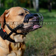 Dog Basket Muzzle for Labrador | Dog Wire Muzzle