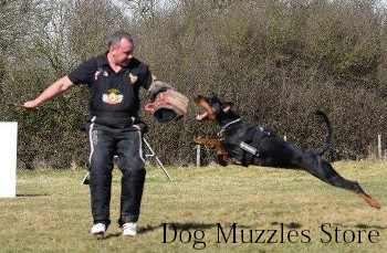dog biting training sleeve