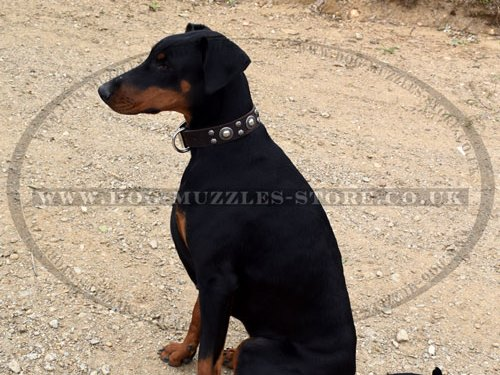 Designer Dog Collar for Doberman