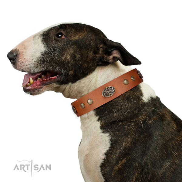 Bull Terrier Collars UK