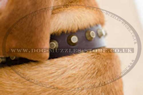 Leather Dog Collar for Dogue De Bordeaux