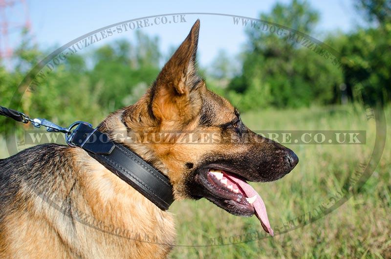 German Shepherd Dog Collar UK Bestseller