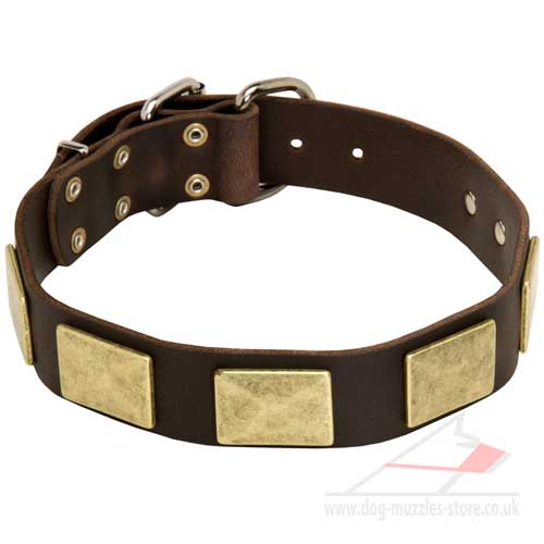 English Bulldog Collar