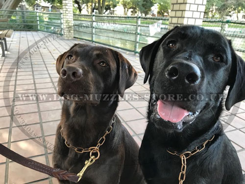 Fur Saver Dog Collars for Labrador Retrievers
