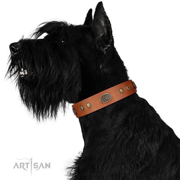 Riesenschnauzer Collars UK for Sale