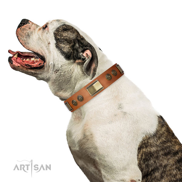 American Bulldog dog collar for sale