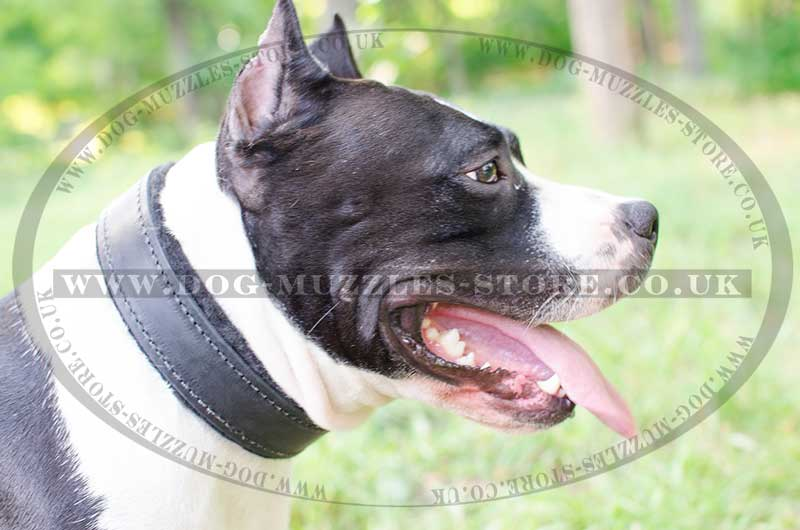 Amstaff Dog Collar Bestseller