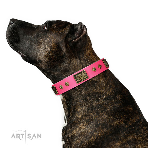 Amstaff dog collar for sale