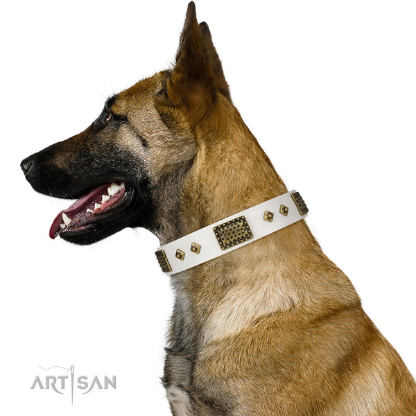 Doberman dog collar for sale