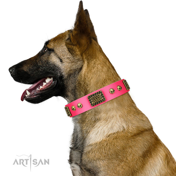 belgian malinois Dog collar for Sale