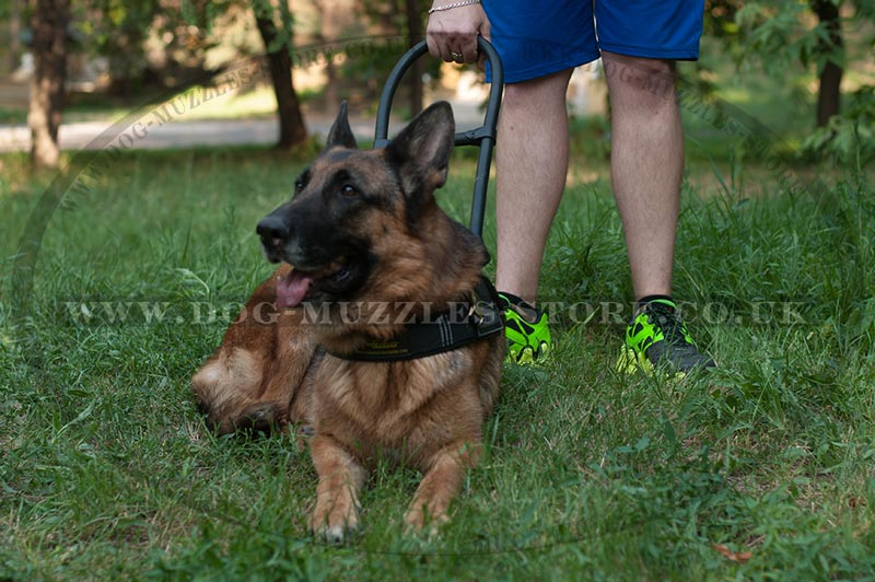 German Shepherd guide harness