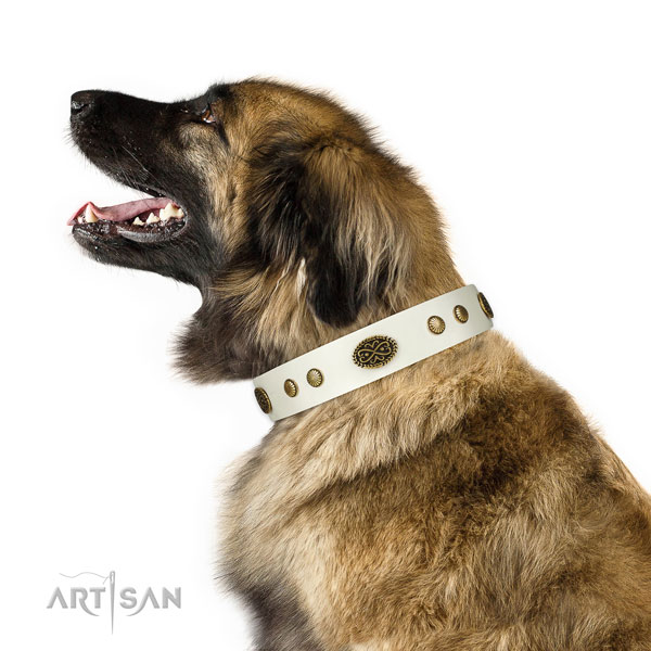 Leonberger collar for sale