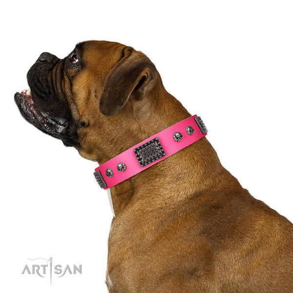 Boxer Dog collar for Sale