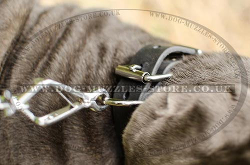 Neapolitan Mastiff Buckle Collar for Dogs
