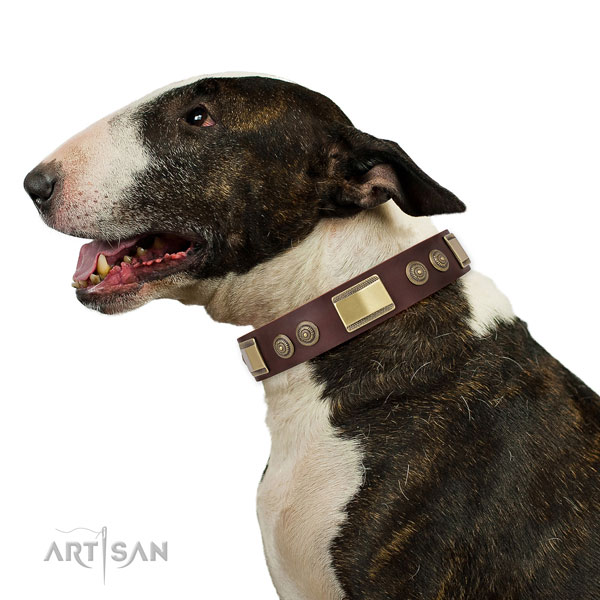 Bull Terrier dog collar for sale