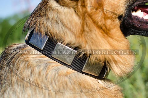 Designer Dog Collars with Plates