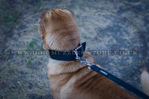 Buy Shar Pei Collars UK