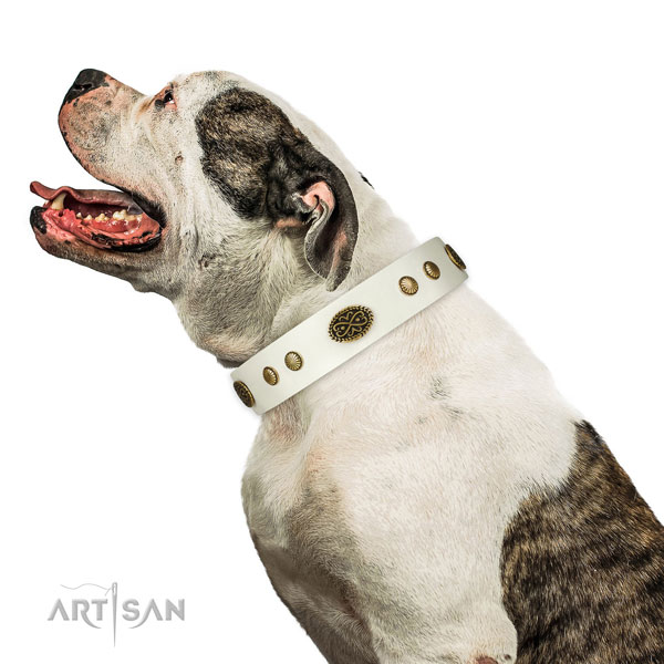 American Bulldog Collars UK for Sale