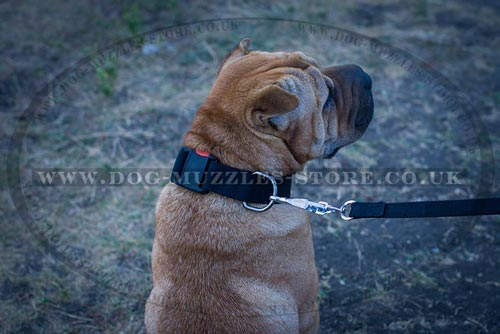 The Best Collar for Shar Pei