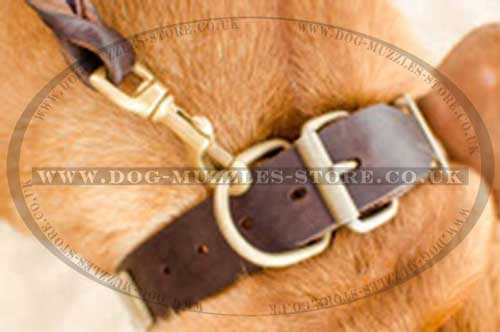 Leather Dog Collar for Dog De Bordo