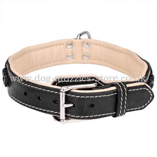 dog leather collar uk