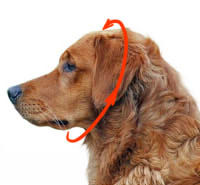 How to choose dog choke collar size