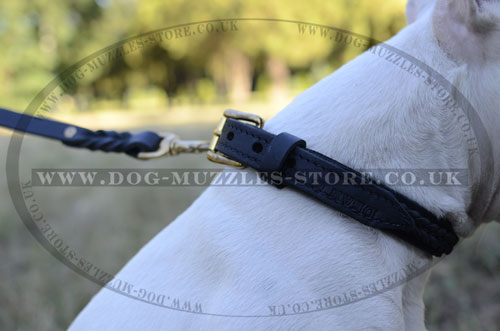Engish Bull Terrier Dog Collars UK