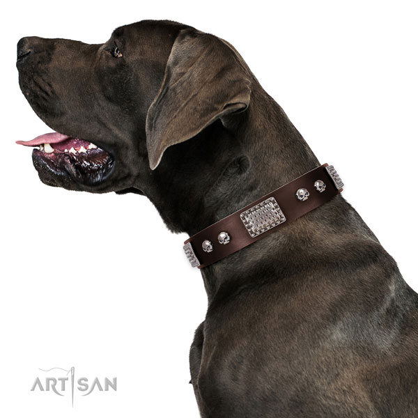 great dane dog collar for sale
