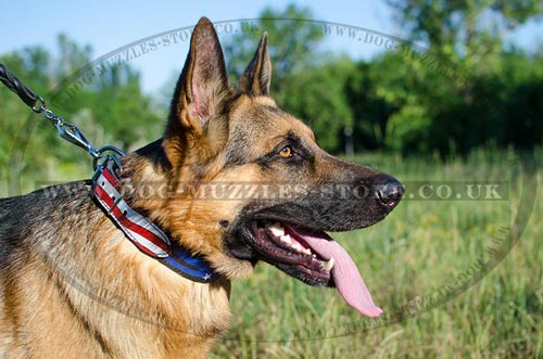 GSD Dogs Collars