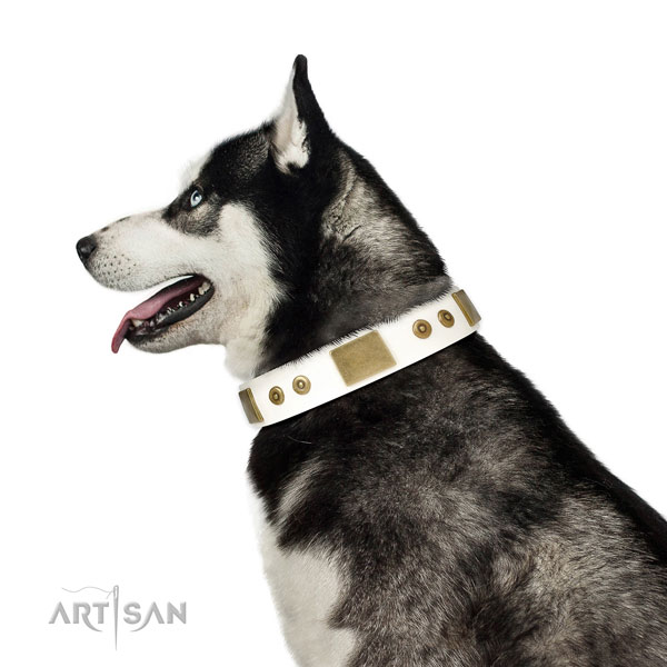 Husky dog collar for sale
