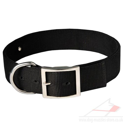 personalized dog collar UK