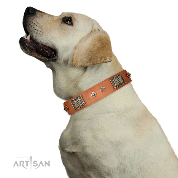 Labrador dog collar for sale