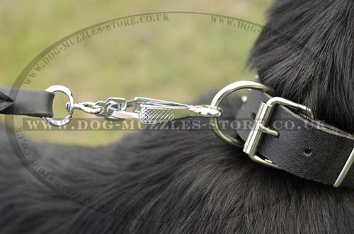 Leather Collar for German Shepherd