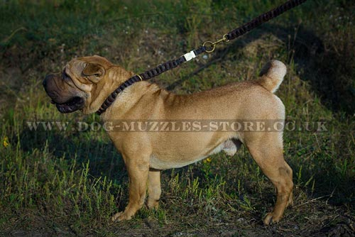 Dog Choker Collar for Shar Pei Training