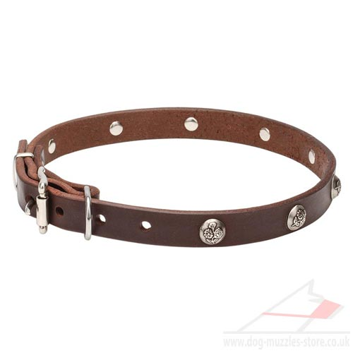 Beautiful Dog Collar with Buckle