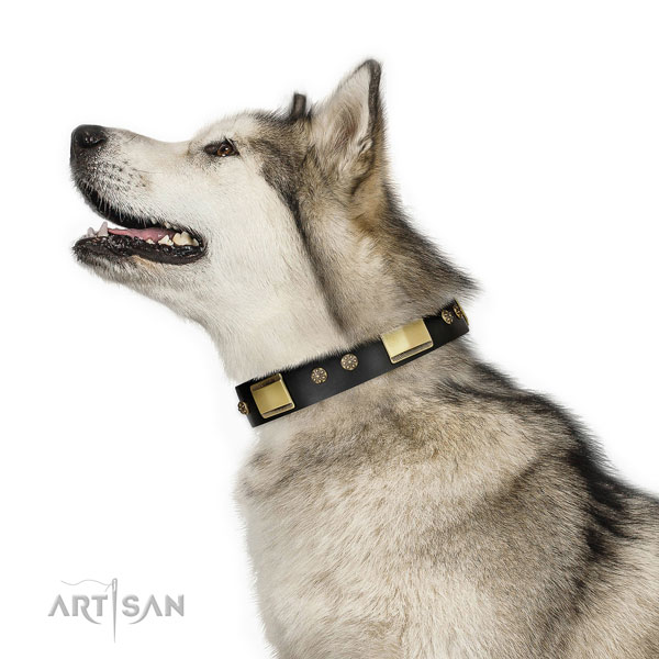 Malamute dog collar for sale