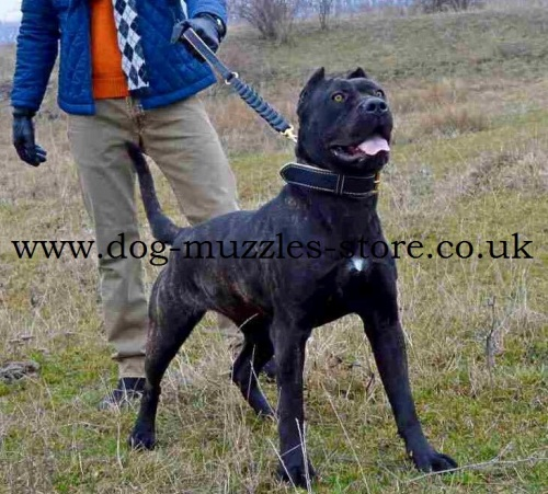 Strong Leather Dog Lead for Big Dogs