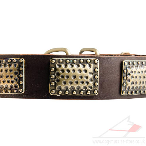 large dog collars
