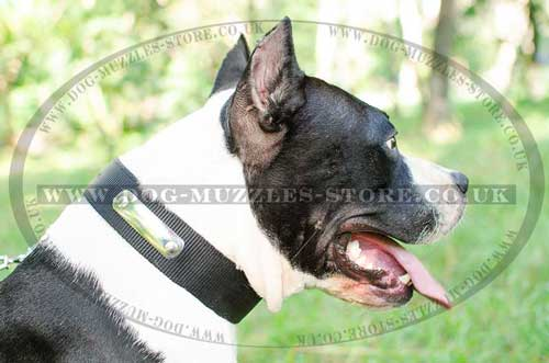 Nylon Dog Collar with Name Plate