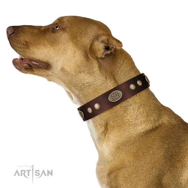 pitbull dog collar for sale