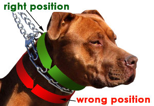 how to use prong dog collar