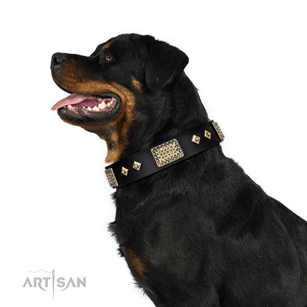 Rottweiler dog collar for sale