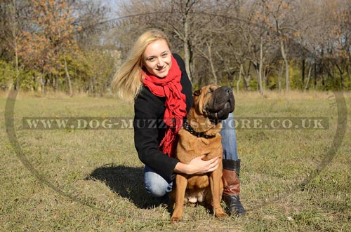 Fancy Dog Collars for Shar Pei Dogs