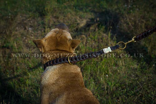 Slip Dog Collar Chain for Shar Pei