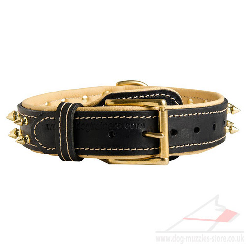 Soft Padded Leather Dog Collar