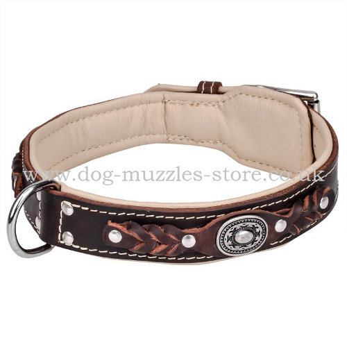 Dog Leather Collar Padded