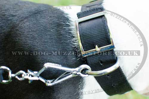 Staffie Collar with Strong Buckle