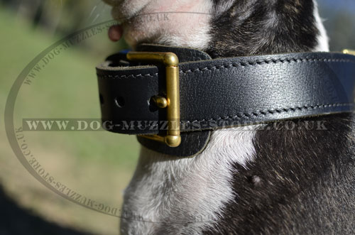 Strong Buckle Dog Collar for Bull Terrier