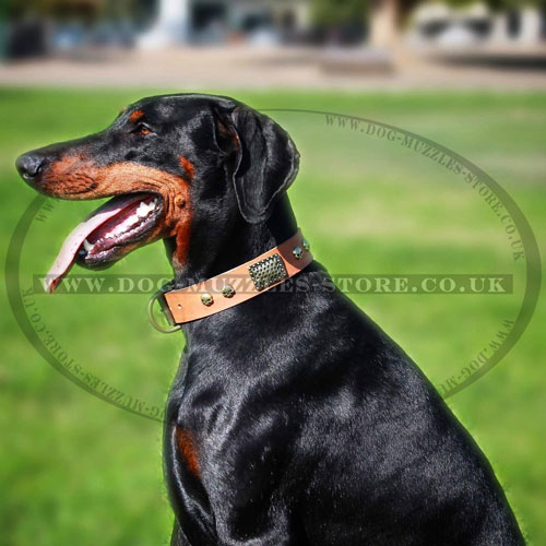 Doberman Dog Collar Lather